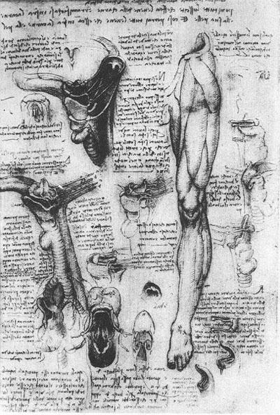 Larynx and leg